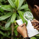 Green jobs in Africa