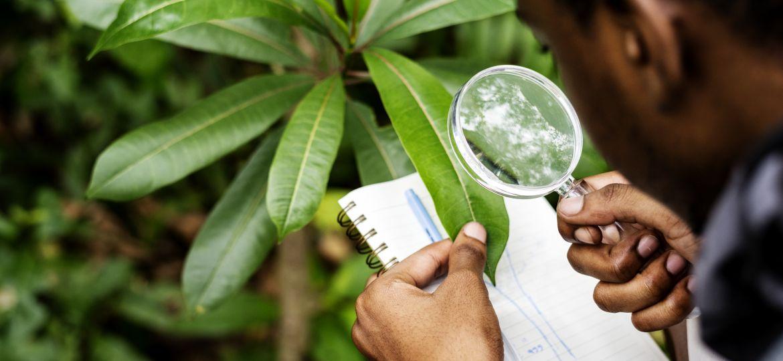 L'emploi vert en Afrique
