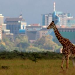 Kenya – Nairobi, top business city in Africa
